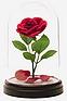 rose belle et la bete